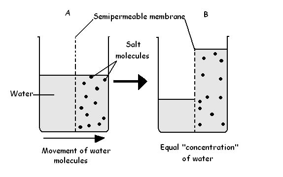 semi-permeable membrane